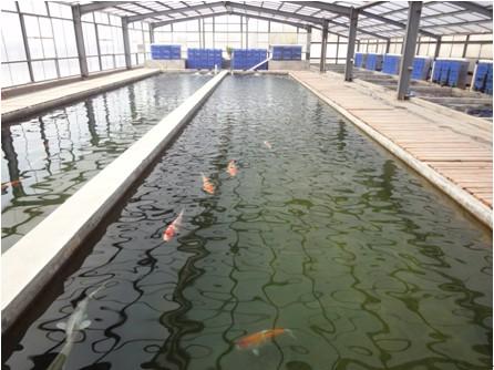 商务与消费服务 创意设计服务 装潢设计 专业锦鲤养殖渔场鱼池水过滤图片