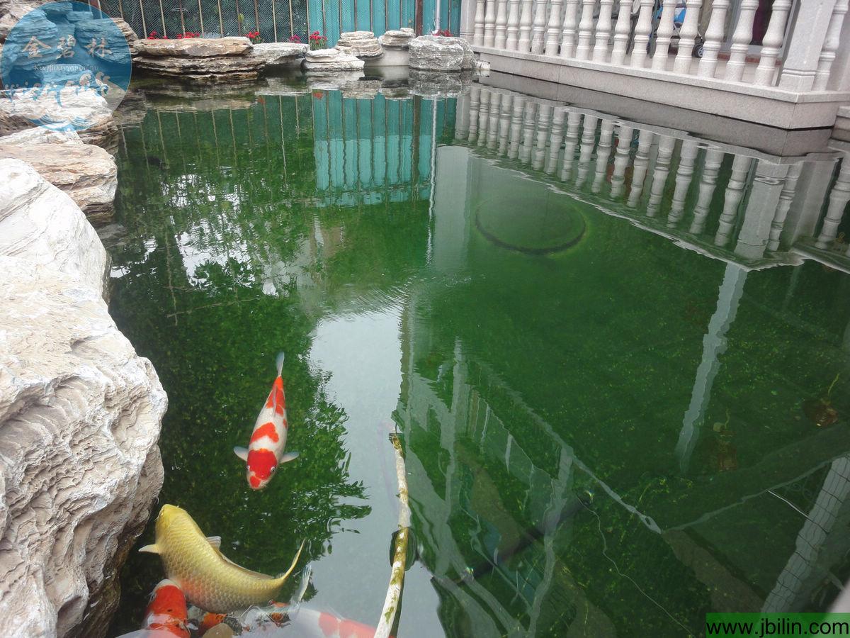 锦鲤鱼池过滤设计图