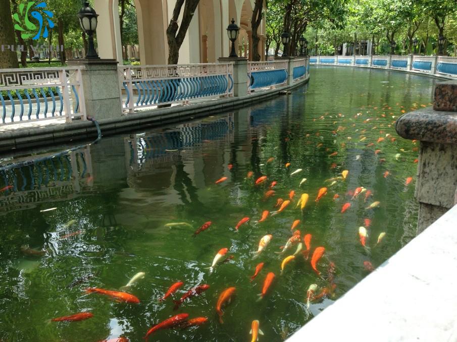 锦鲤鱼池过滤系统设计建造