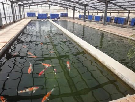 专业锦鲤养殖渔场鱼池水过滤工程方案